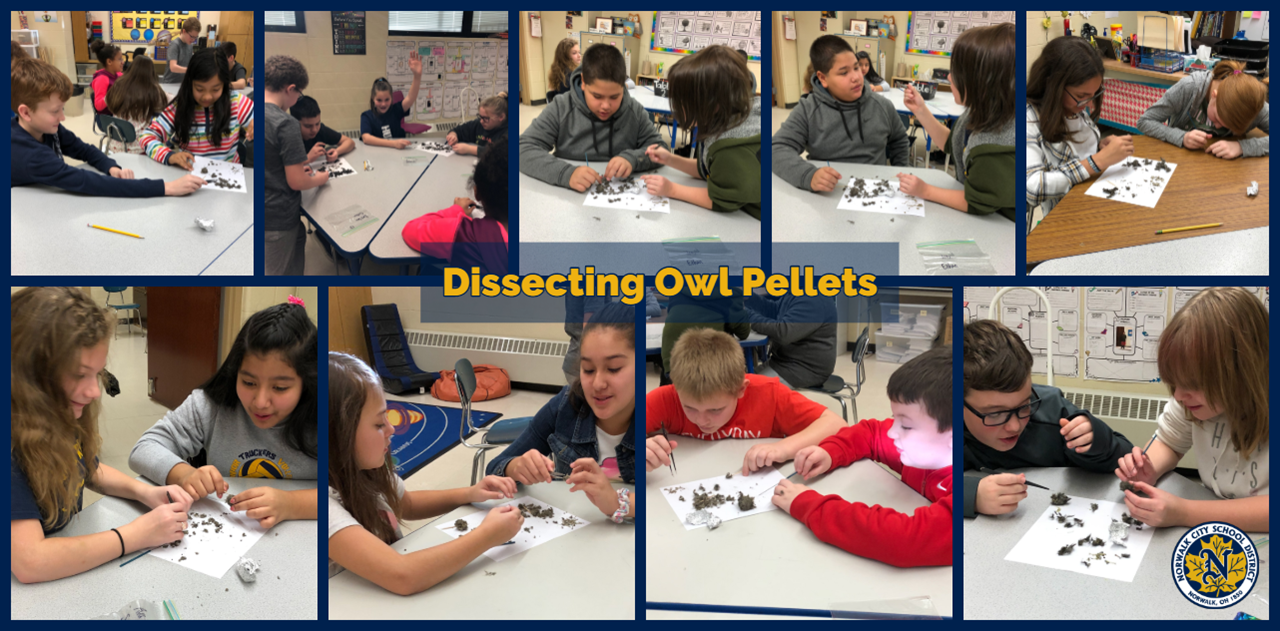Mrs. Steffanni's students dissect owl pellets