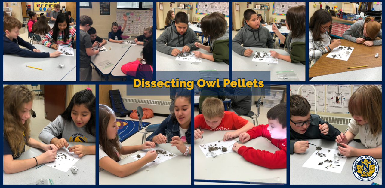 Mrs. Steffanni's students dissect owl pellets at Main Street School